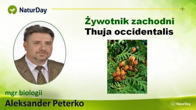 Żywotnik Zachodni – Ekstrakty ziołowe Natur Day